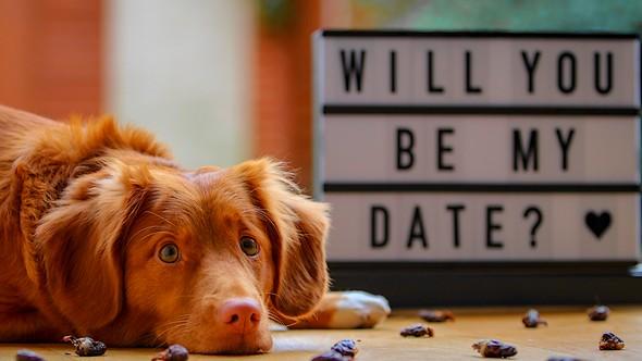 dating site tutorial